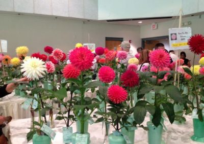 2012 Dahlia Show Brookside Gardens by Paula Post