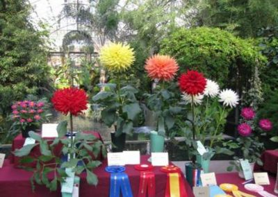 Images from the Greater Philadelphia Dahlia Society Show