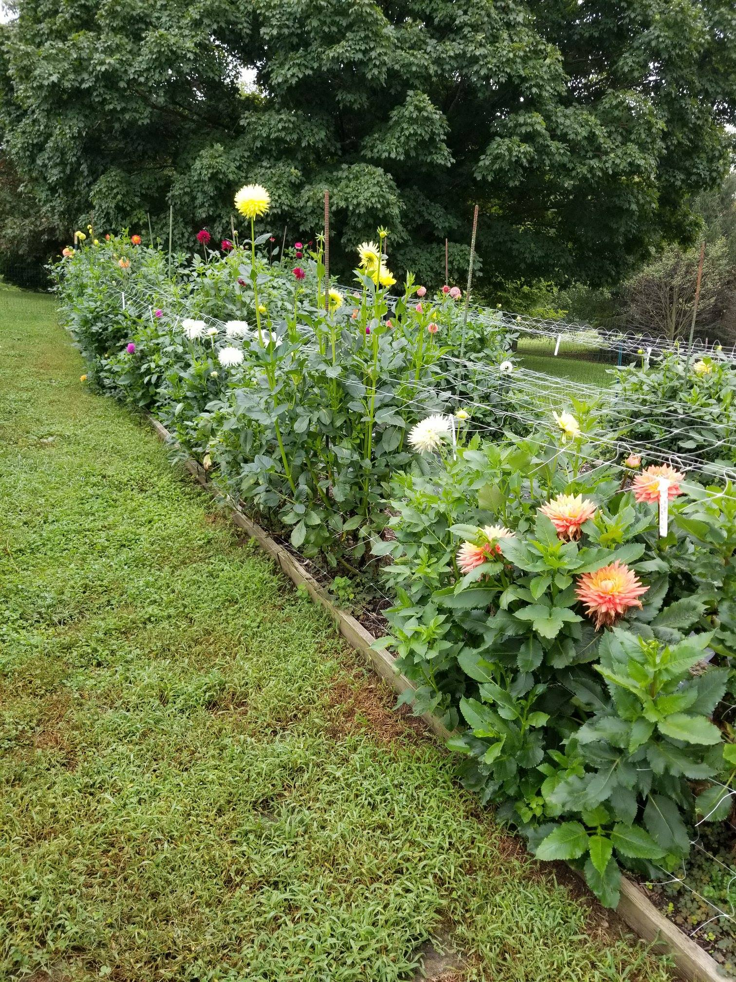 Mid Atlantic Trial Garden Work Day, 9/16/18   Deadheading,