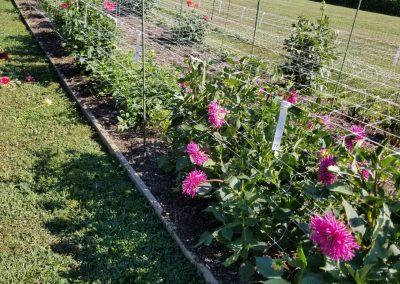 Trial Garden Bed 2