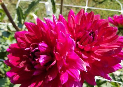 Trial Bloom