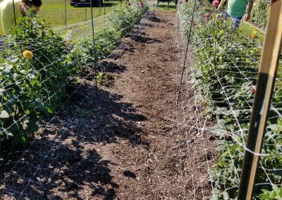 Trial Garden Bed 3/NCDS Member Garden