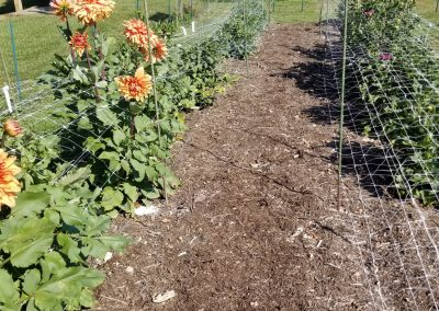 Trial Garden Bed 1